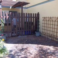 Photo Thumbnail #1: Planted Carolina Jasmine Vine below trellis,...