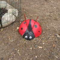 Photo Thumbnail #8: We also have giant ladybugs here, they don't...