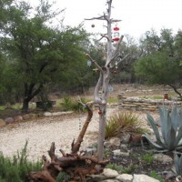 Photo Thumbnail #1: This is a jewelry tree. Note the horned toad...