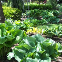 Photo Thumbnail #1: My perennial strolling garden.  May, 2011....