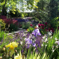 Photo Thumbnail #2: My perennial strolling garden.  June, 2011....