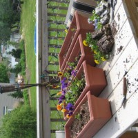 Photo Thumbnail #8: My flower boxes for around the deck. I don't...