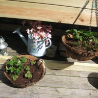 Photo Thumbnail #12: Strawberries in the coconut baskets.. already...