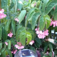 Photo Thumbnail #2: pink bloom