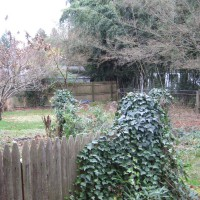 Photo Thumbnail #16: BEFORE: our fence posts covered in ivy and...