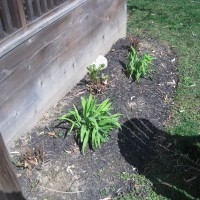 Photo Thumbnail #3: BEFORE:  these ferns should be good (at least...