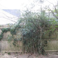 Photo Thumbnail #19: BEFORE: I need to get rid of this bamboo before...