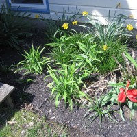 Photo Thumbnail #1: BEFORE: Some flowers coming up this spring -...