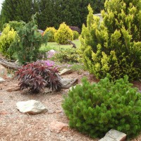 Photo Thumbnail #4: One of our rock gardens.