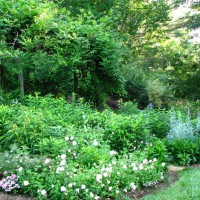 Photo Thumbnail #1: Garden in between Spring and Summer blooming peak.