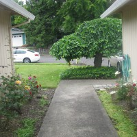 Photo Thumbnail #4: Looking out the front door into the courtyard.