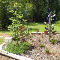 Photo Thumbnail #23: cottage garden with bottle tree