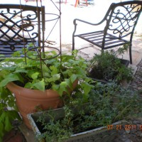 Photo Thumbnail #16: sitting area and plants in rock garden