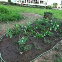 Photo Thumbnail #10: This is my peonie bed untill I can start on my...