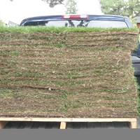 Photo Thumbnail #2: 300 sqft of *earth carpet*. Mostly because 60...