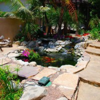 Photo Thumbnail #2: A Koi pond basks in the sun