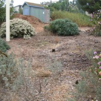 Photo Thumbnail #5: Before photo of the Manhattan Beach Botanical...