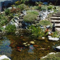 Photo Thumbnail #12: Koi pond in Manhattan Beach