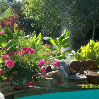 Photo Thumbnail #13: Pool garden