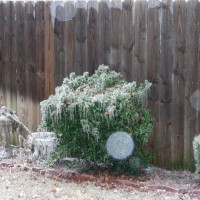Photo Thumbnail #4: Ice Coating Yard Art & Hedges