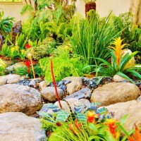 Photo Thumbnail #15: The most vibrant garden of Los Angeles