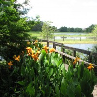Photo Thumbnail #19: Recent picture of the dock and pond.