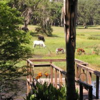 Photo Thumbnail #26: We love being able to see cows from the backyard.