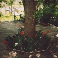 Photo Thumbnail #9: Added more plants including bromeliads around...