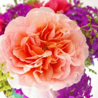 Photo Thumbnail #7: Abraham Darby