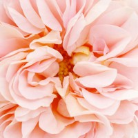 Photo Thumbnail #9: Abraham Darby