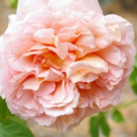 Photo Thumbnail #10: Abraham Darby