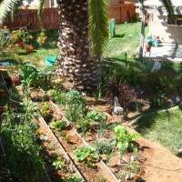 Photo Thumbnail #23: Our veggie and herb garden
