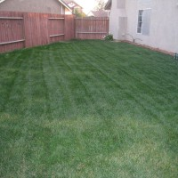 Photo Thumbnail #17: Side yard one year ago:  Currently there is a...