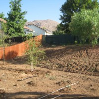 Photo Thumbnail #2: Irrigation and trees put in, courtesy of the hubby