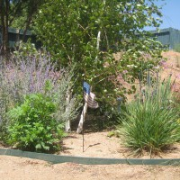 Photo Thumbnail #15: The Birch planter:  Russian Sage, Garlic...
