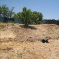 Photo Thumbnail #8: The Hill....this Ca Pepper Tree is HUGE now!...