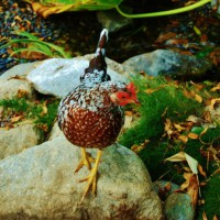 Photo Thumbnail #9: Chicken by the stream bed
