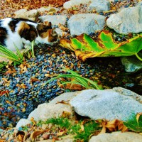 Photo Thumbnail #10: Cat 'ming-Ming' by the stream