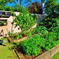 Photo Thumbnail #24: My veggie garden in all its glory