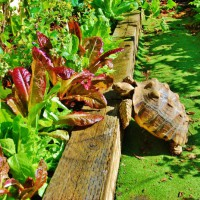 Photo Thumbnail #23: Tippy the turtle has lunch