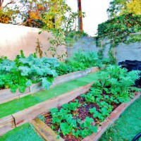 Photo Thumbnail #3: My Veggie Gardens