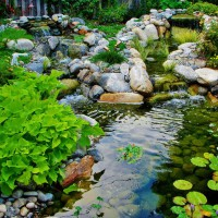 Photo Thumbnail #12: This water garden is surrounded by a native garden