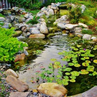 Photo Thumbnail #14: This water garden actually has fish