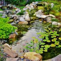 Photo Thumbnail #14: This water garden actually has fish