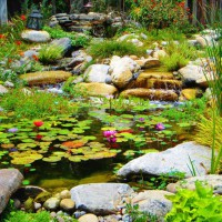Photo Thumbnail #15: lots of water lillies