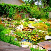 Photo Thumbnail #5: Native palnts surround this watergarden