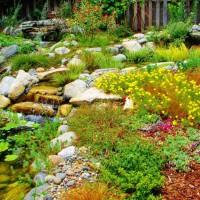 Photo Thumbnail #23: Mulch surrounds this water garden