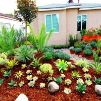 Photo Thumbnail #19: Native garden with a Rain garden