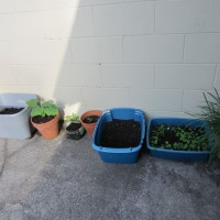 Photo Thumbnail #1: Different types of containers with sprouting...