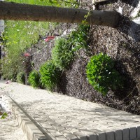 Photo Thumbnail #5: We will be purchasing absolute black mulch to...